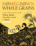 Homegrown Whole Grains - St. Clare Heirloom Seeds