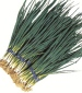 Onion Evergreen White Bunching - St. Clare Heirloom Seeds
