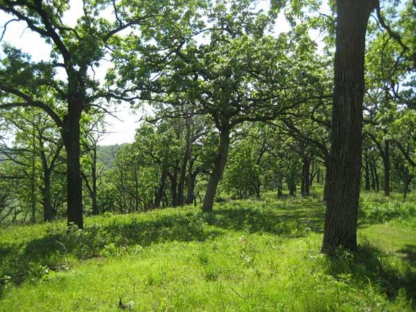 Gardening in Northern Wisconsin - St. Clare Audio