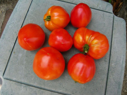 Tomato, Paste - Organic Amish Paste - St. Clare Heirloom Seeds