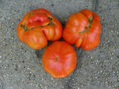 Tomato, Red - Organic Beefsteak - St. Clare Heirloom Seeds