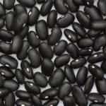 Bean, Dry - Black Turtle Bean - Photo Credit: Sanjay Acharya - St. Clare Heirloom Seeds