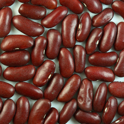 Bean, Dry - Dark Red Kidney - Photo Credit: Sanjay Acharya - St. Clare Heirloom Seeds