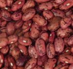 Vermont Cranberry Bean - St. Clare Heirloom Seeds
