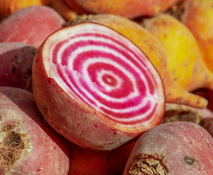 Beet - Chioggia - St. Clare Heirloom Seeds