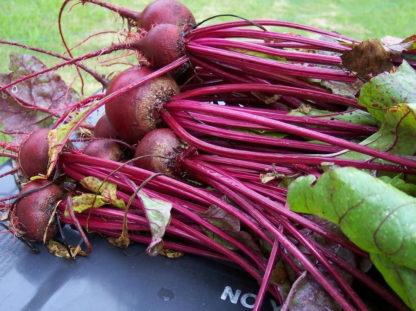 Beet - Ruby Queen - St. Clare Heirloom Seeds