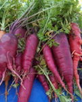 Atomic Red Carrot - St. Clare Heirloom Seeds