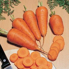 Chantenay Red Core carrot - St. Clare Heirloom Seeds