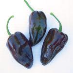 Pepper, Hot - Mulato Isleno - St. Clare Heirloom Seeds