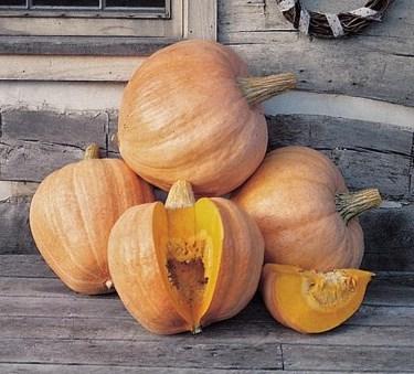 Pumpkin - Amish Pie - St. Clare Heirloom Seeds