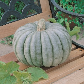 Pumpkin - Jarrahdale Blue - St. Clare Heirloom Seeds