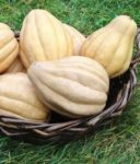 Squash, Winter - Thelma Sanders - St. Clare Heirloom Seeds
