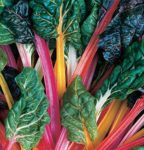 Swiss Chard - Rainbow Mix - St. Clare Heirloom Seeds