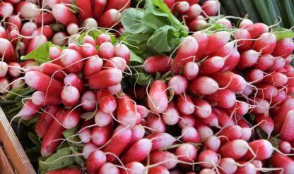 French Breakfast Radish - St. Clare Heirloom Seeds