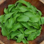 Arugula - Astro - St. Clare Heirloom Seeds