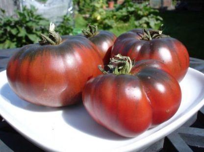 Tomato - Black Krim - St. Clare Heirloom Seeds