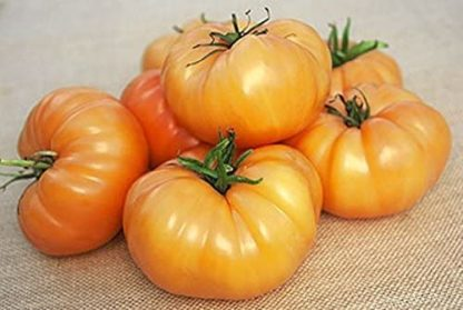 Kentucky Beefsteak Tomato - St. Clare Heirloom Seeds