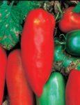 Tomato, Paste - Sausage Tomato - St. Clare Heirloom Seeds