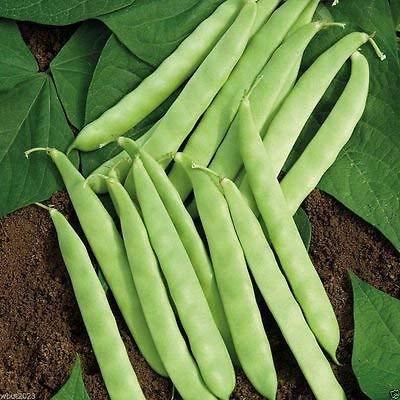 Roma II Bean - St. Clare Heirloom Seeds