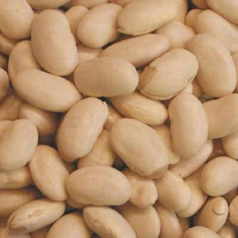 Navy Bean - St. Clare Heirloom Seeds