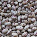 October Bean - St. Clare Heirloom Seeds