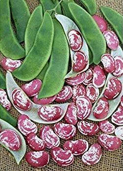Christmas Lima Bean - St. Clare Heirlom Seeds