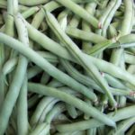 Bean - Top Crop - St. Clare Heirloom Seeds