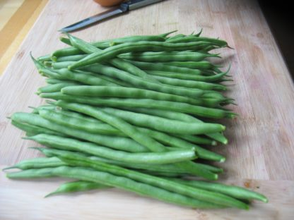 Kentucky Blue Pole Bean - St. Clare Heirloom Seeds