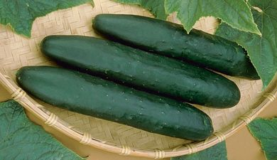Spacemaster 80 Bush Cucumber - St. Clare Heirloom Seeds