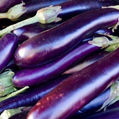 Long Purple Eggplant - St. Clare Heirloom Seeds