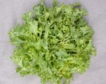 Green Curled Ruffec Endive - St. Clare Heirloom Seeds
