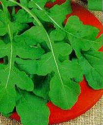 Arugula Roquette Herb - St. Clare Heirloom Seeds