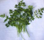 Herb, Annual - Parsley Plain Leaf - St. Clare Heirloom Seeds