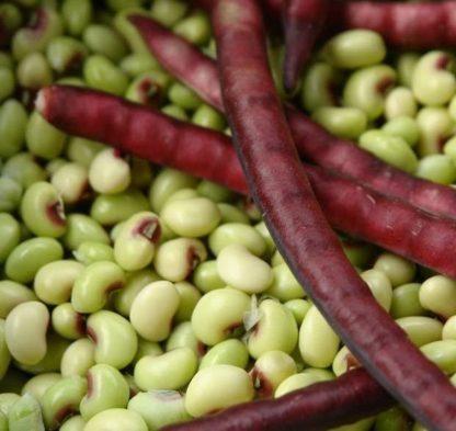 Pea, Cowpea – Pinkeye Purple Hull - St. Clare Heirloom Seeds