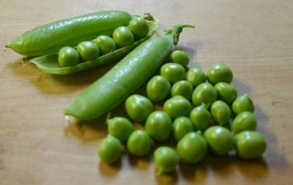 Pea, Shelling, English Pea - Early Frosty - St. Clare Heirloom Seeds