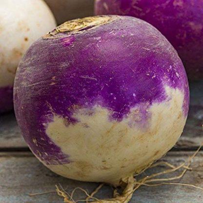 Rutabaga - Laurentian - St. Clare Heirloom Seeds