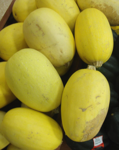 Squash, Winter - Vegetable Spaghetti - St. Clare Heirloom Seeds