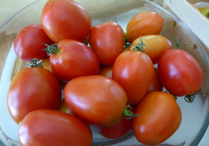Tomato, Paste - Amish Paste - St. Clare Heirloom Seeds