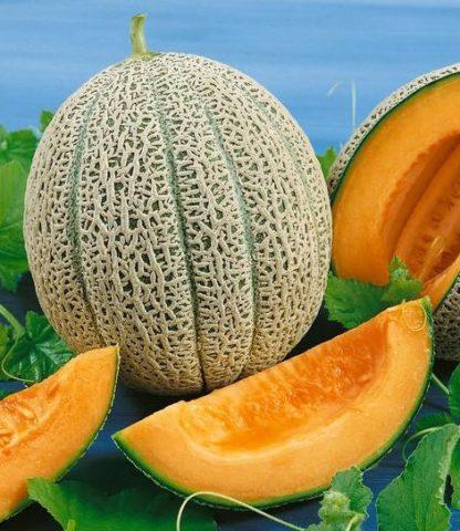 Hales Best Jumbo Cantaloupe - St. Clare Heirloom Seeds