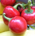 Pepper, Sweet - Sweet Cherry Pepper - St. Clare Heirloom Seeds