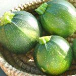 Squash, Summer - Round Zucchini - St. Clare Heirloom Seeds