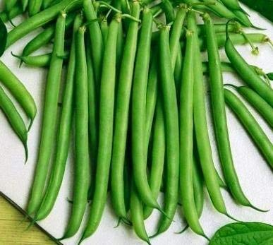 Slenderette Bush Bean - St. Clare Heirloom Seeds