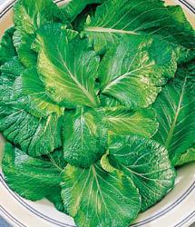 Mustard - Tendergreen - St. Clare Heirloom Seeds