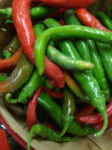 Pepper, Hot - Cayenne, Large Red Thick - St. Clare Heirloom Seeds