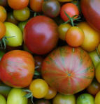 Tomato Heirloom Seed Blends - St. Clare Heirloom Seeds