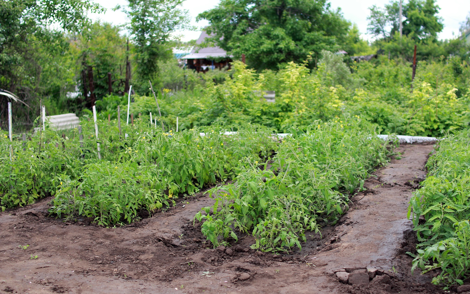 How to Plan Your Organic Open Pollinated / Heirloom Vegetable Garden - St. Clare Heirloom Seeds
