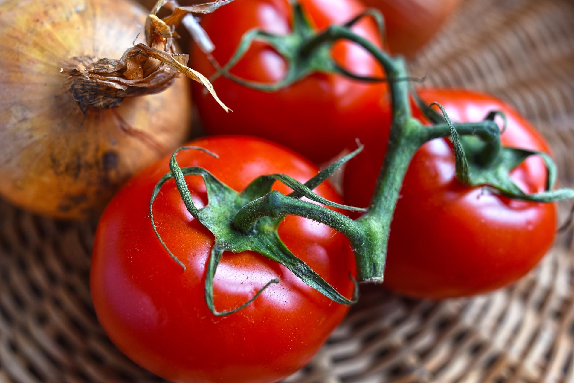 Heirloom tomatoes - St. Clare Heirloom Seeds