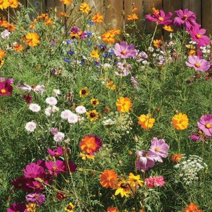 Flower - Wild Flower Cut Flower Mix - St. Clare Heirloom Seeds